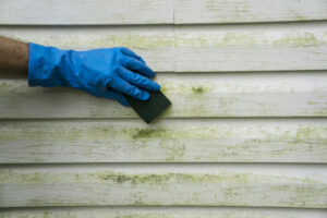 Learn How to Use a Pressure Washer to Get Rid of Green Algae on Your Home's Siding